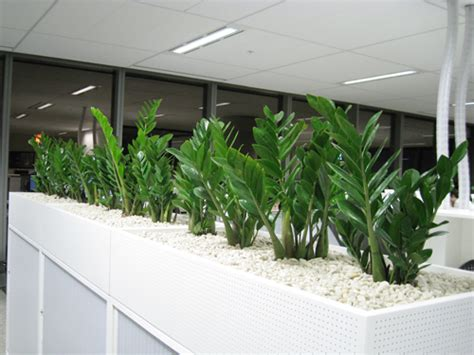 Built In Planter Boxes by Planter Boxes For Hire Sydney Buildings Hotels Offices
