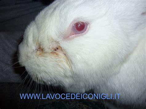 alimentazione forzata coniglio neoplasie tumore cancro