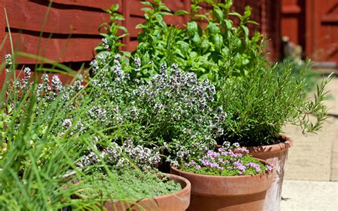 how to grow a herb garden in pots how to plant a herb garden in pots planters and