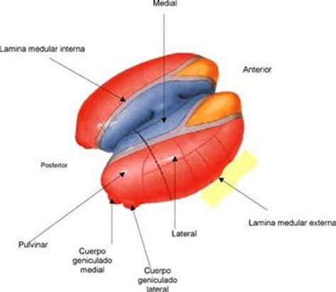 the wesley center online sentimientos sistemas y sistema nervioso mind42