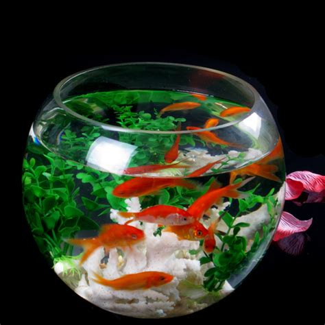 Large Goldfish Bowl Vase by Shop Popular Large Fish Bowls From China Aliexpress