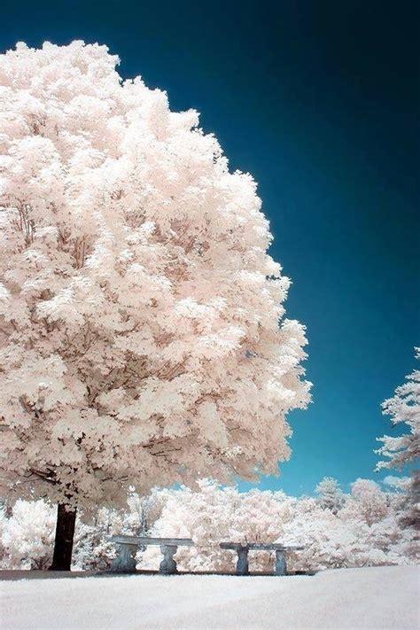 5 Things White And Beautiful by Petali Di Perle Fiori Composizioni Albero Della Neve