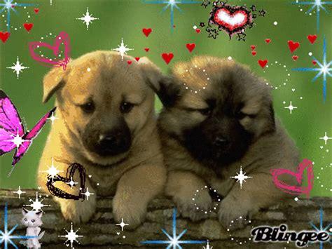 imagenes con movimiento y brillo de animales im 225 genes de perritos tiernos con movimiento para google plus