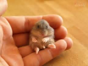 a very cute baby hamster all things ladybird pinterest