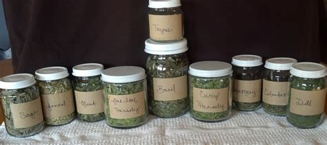 What Is The Shelf Of Dried Spices by Storing Dried Herbs Modernroots