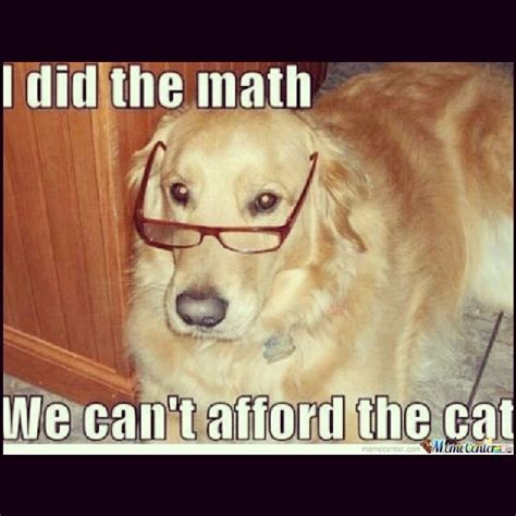 puppy jokes cat math