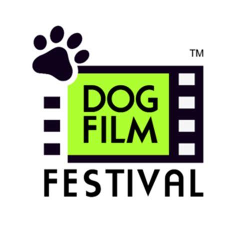 quarantine film festival cats in quarantine halo pets