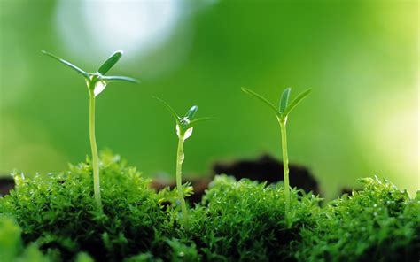 plant wallpaper moisturizing eye series sprout leaves wallpaper 23