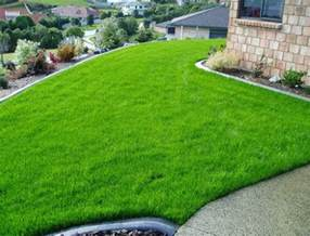 best grass seed for shady areas home and garden