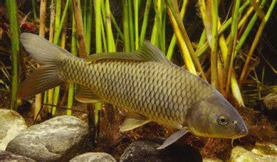 Pelet Halco Umpan Pancing Mancing Ikan Air Tawa Diskon macam umpan pancing kolam air tawar