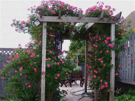 Arbor Garden Zone 29 Best Images About Roses And Clematis On