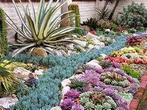 las plantas suculentas o crasas first impression landscaping