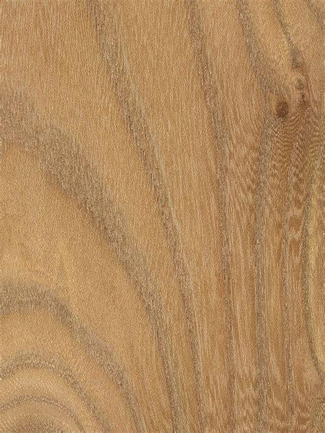 red elm the wood database lumber identification hardwood