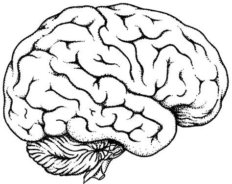 White Brain black and white brain pictures to pin on