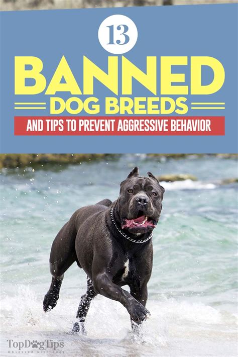 banned breeds 13 banned breeds and tips to prevent aggressive behavior