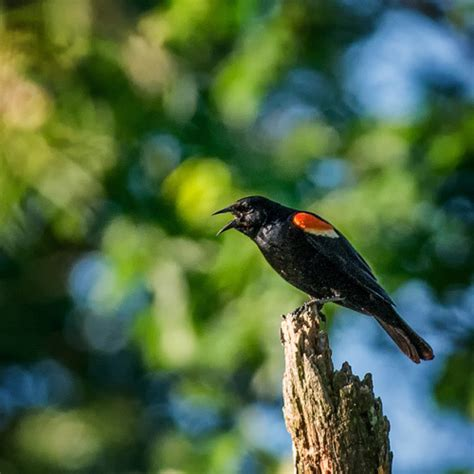 common birds in michigan pictures to pin on pinterest