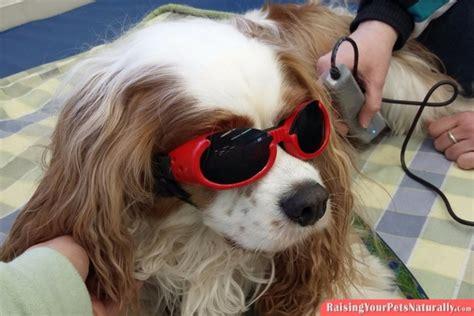 puppy insurance plans pet insurance insurance cat insurance is pet insurance worth it raising