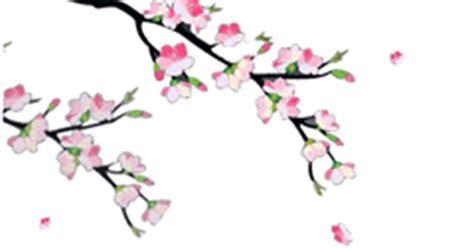 gambar wallpaper bunga sakura bergerak dian yang tak kunjung padam aneka animasi bunga sakura