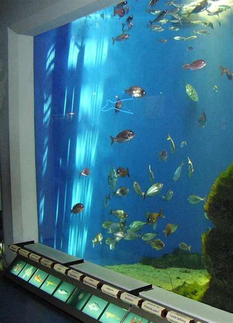 Lu Aquarium 3 Warna harga aquarium fiber binatang peliharaan
