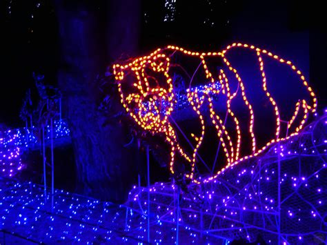 Woodland Park Zoo Wildlights A Roaring Good Time Woodland Zoo Lights