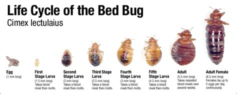 Bed Bugs Exterminator Prices by Amazing Bed Bug Extermination Cost Inspection And