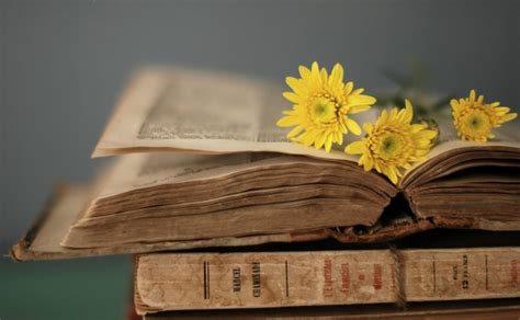 flower books style book book pages flower yellow background wallpaper