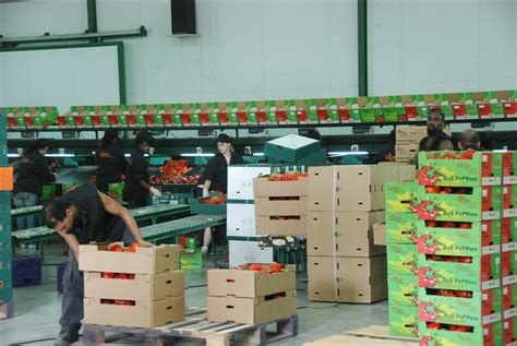 gilad desert produce ltd packing house