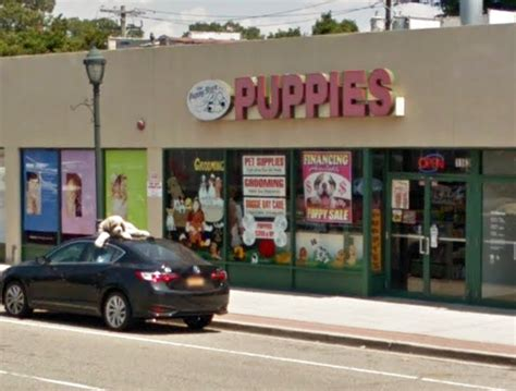 the puppy store merrick merrick puppy store owner arrested on animal cruelty charges herald community