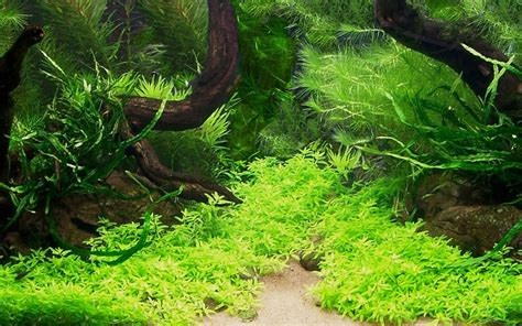 aquarium design wallpaper mini aquarium creative design wallpaper 5 plant