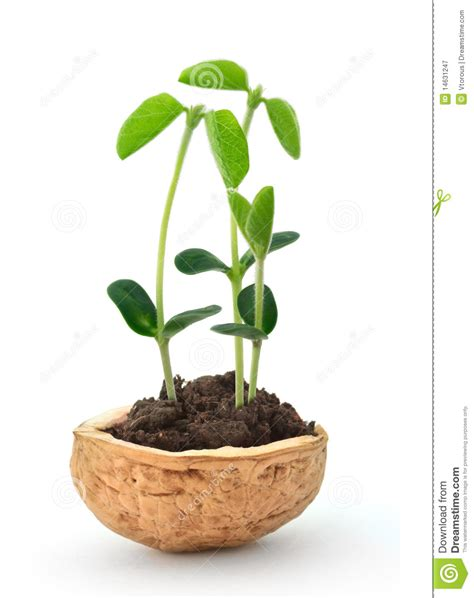 small plant small plant in a nutshell stock image image of macro