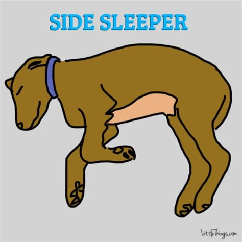 6 doggy sleeping positions that will tell you a lot about
