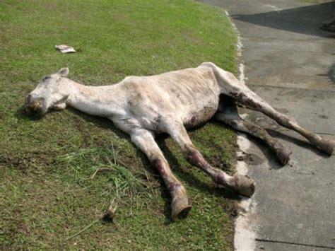 imagenes de animales maltratados maltrato animal