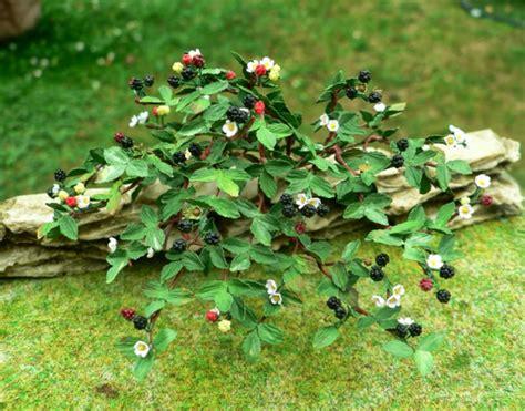 Garten Busch by Brombeere Im Garten Einen Sch 246 Nen Strauch Im Eigenen Hof Z 252 Chten