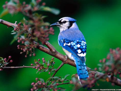 national geographics beautiful birds wallpapers