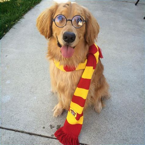 epic dog halloween costume ideas  guide