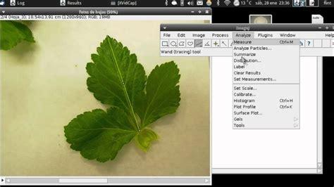 tutorial online c tutorial imagej medir 225 rea foliar youtube
