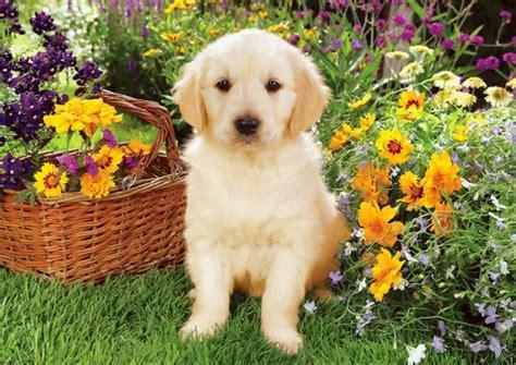 49 cute dog wallpapers top ranked cute dog wallpapers pc lkz484 animals in spring desktop wallpaper wallpapersafari