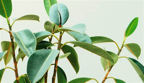 best indoor plants for clean air 6 best indoor plants to purify the air 80 clean clean