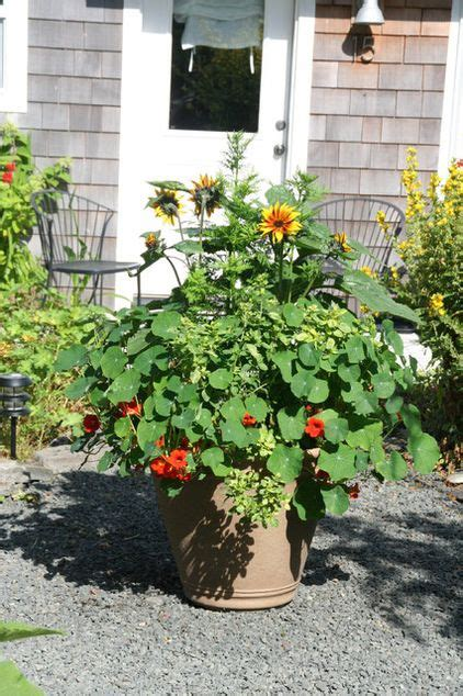 fall plants container gardening pinterest fall container plants secret garden pinterest