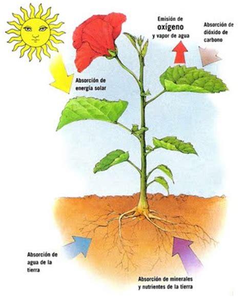 olguchiland las plantas ii las plantas la alimentaci 243 n de las plantas quot la fotos 237 ntesis quot