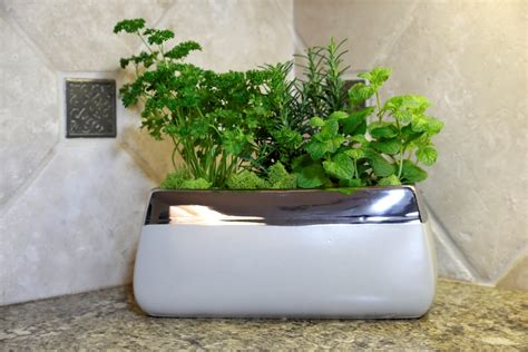 unique indoor planters 100 unique indoor planters best decorative indoor