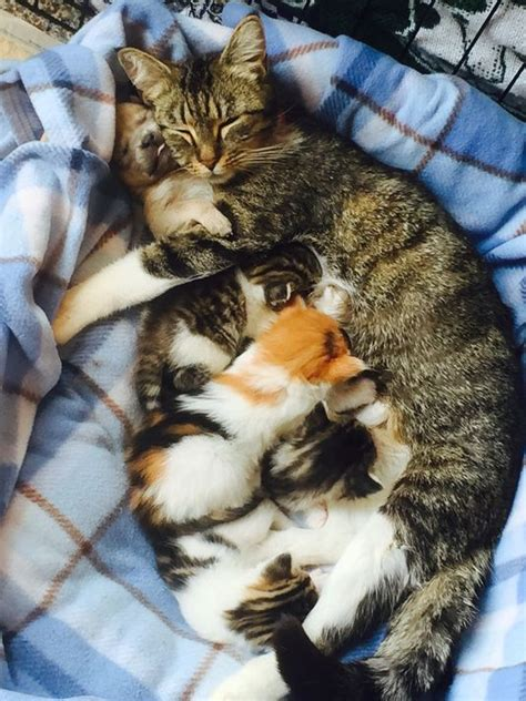 raised by cats newborn puppy and his cat family