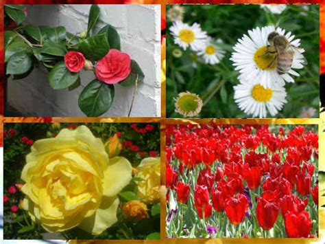 list of common garden flowers list of common flowers for your garden उद य न क ल ए