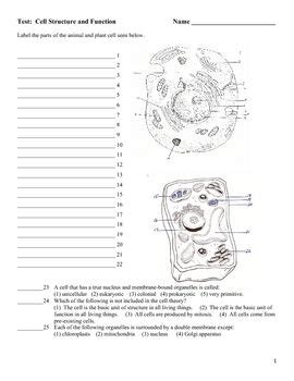 cell structure and processes worksheet the world s catalog of ideas