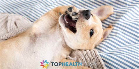 why do dogs bite their dogs chewing paws top health today