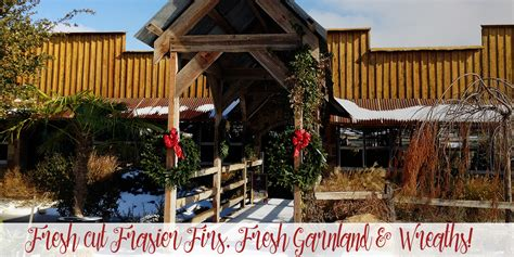 best 28 christmas tree farm fort worth live christmas
