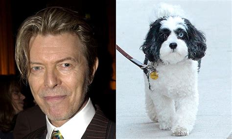 david bowie dogs stories photos and about pets hello us