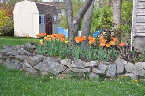 Lawn Tips Archives Emil Yedowitz Blooms Archives Emil Yedowitz Landscaping And Irrigation