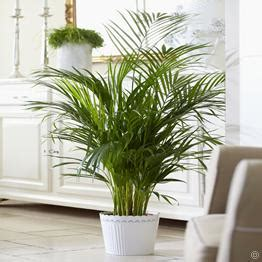 buy house plants uk houseplants and indoor plants on sale buy online it s easy and they make a great gift