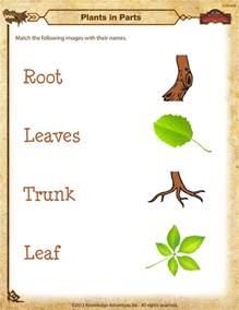 plants in parts worksheet free kindergarten science